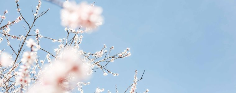Playlist En attendant le printemps © ornella binni