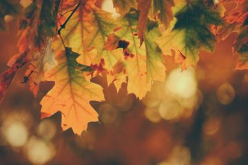 l'automne et ses chansons